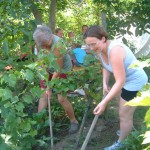 falusi munkák: kapálás